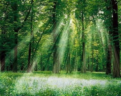 WALLPAPER Beautiful Nature