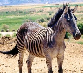 16 Amazing hybrid animals | Amazing Creatures