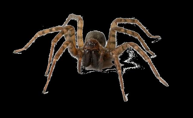 Mazmorra Gris: La legenda de Dragora [ROL] - Página 4 Spider2