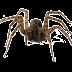 La posible existencia de la araña gigante congoleña