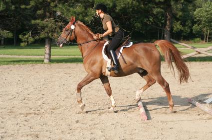 horse riding horse riding 425x282