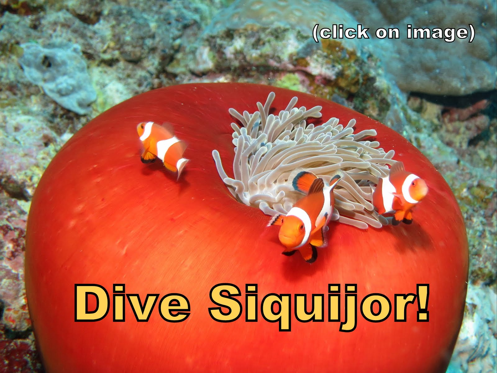 Dive Siquijor - click on image for details