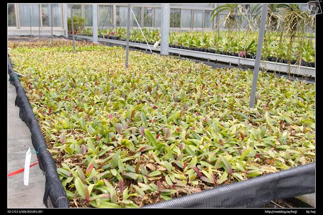 2015-01-30南投草屯石川-樸提蘭園-全國最大狐狸尾蘭及茶花展示農場