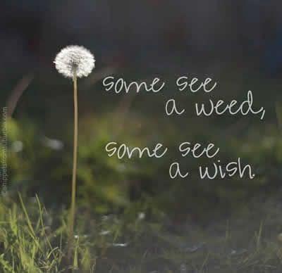 ...a wish
