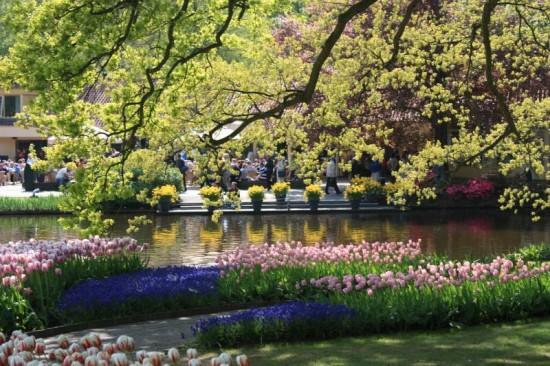 صور لحديقة كيوكينهوف Keukenhof أكبر و أجمل حديقة أزهار في العالم