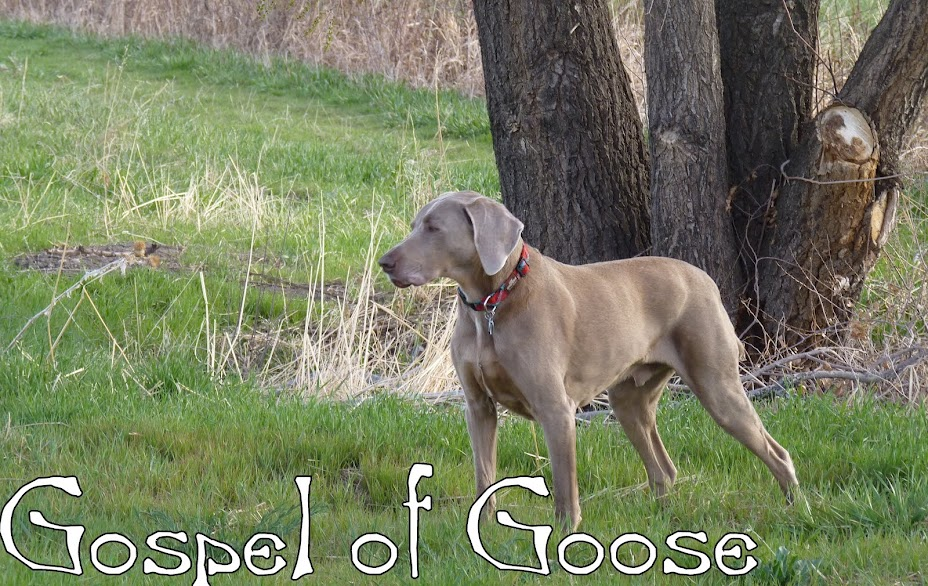 Gospel of Goose