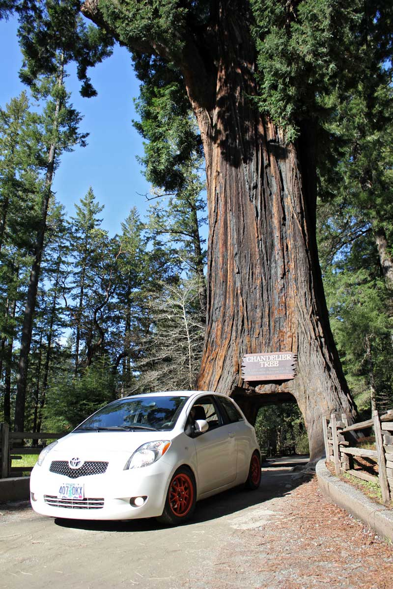 My Toyota Yaris ina tree in the Chandelier Tree in California