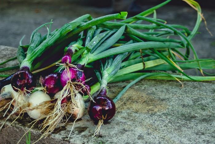 harvest garden countryside village ukraine onion