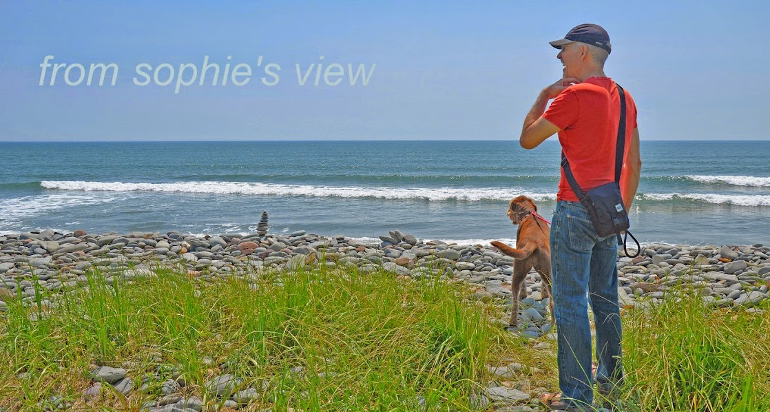 """from sophie's view"""