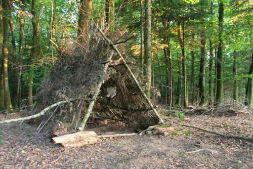 """Conseils Municipaux d'enfants des C u00f4tes d'Armor INVITATION pour une journée""""cabanes dans les bois"""" # Cabanes Dans Les Bois"""