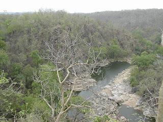 Madhya Pradesh Forest