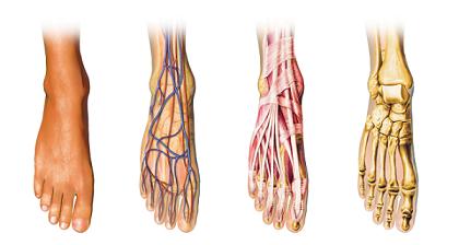 Mala-circulación-sanguínea-manos-y-pies-fríos-Aquí-es-cómo-resolver-su-problema