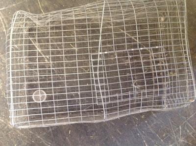 Dove trap for Waimanalo feed supply