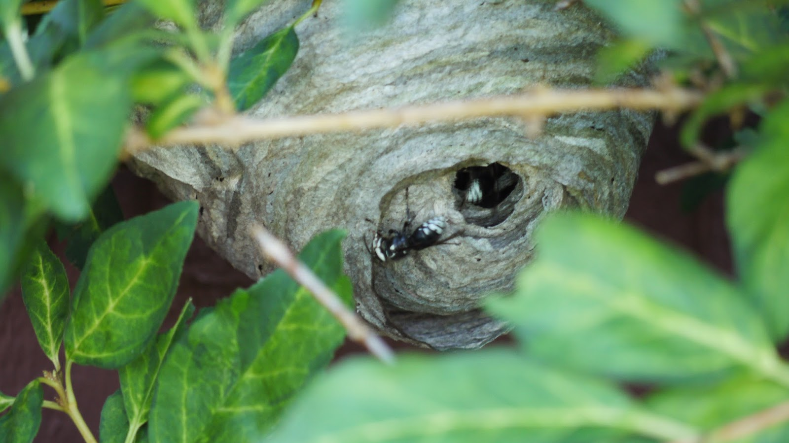 how to get rid of bumble bee nest under deck