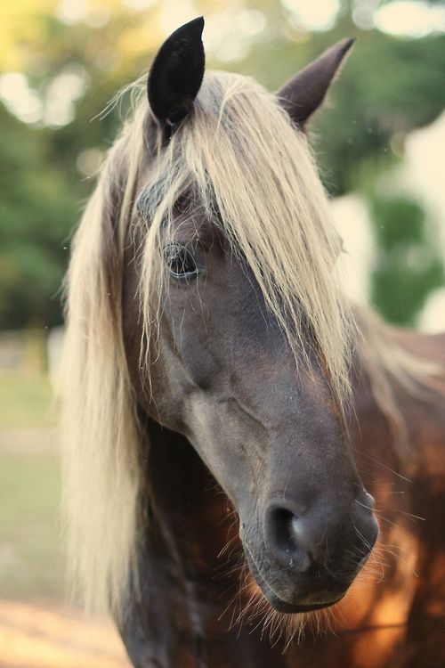 Liver Chestnut Horse With Flaxen Mane And Tail - photo#16