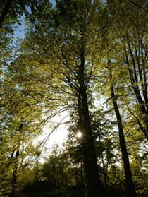 Gallery of trees and views of Thorpe woodlands