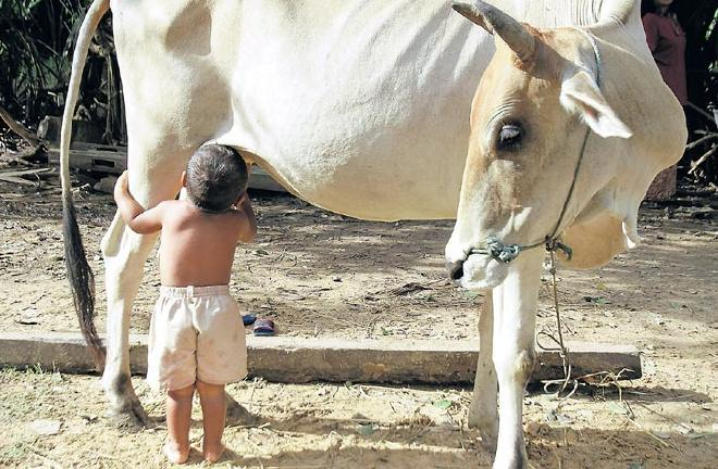 Child Drinking Cow's Milk