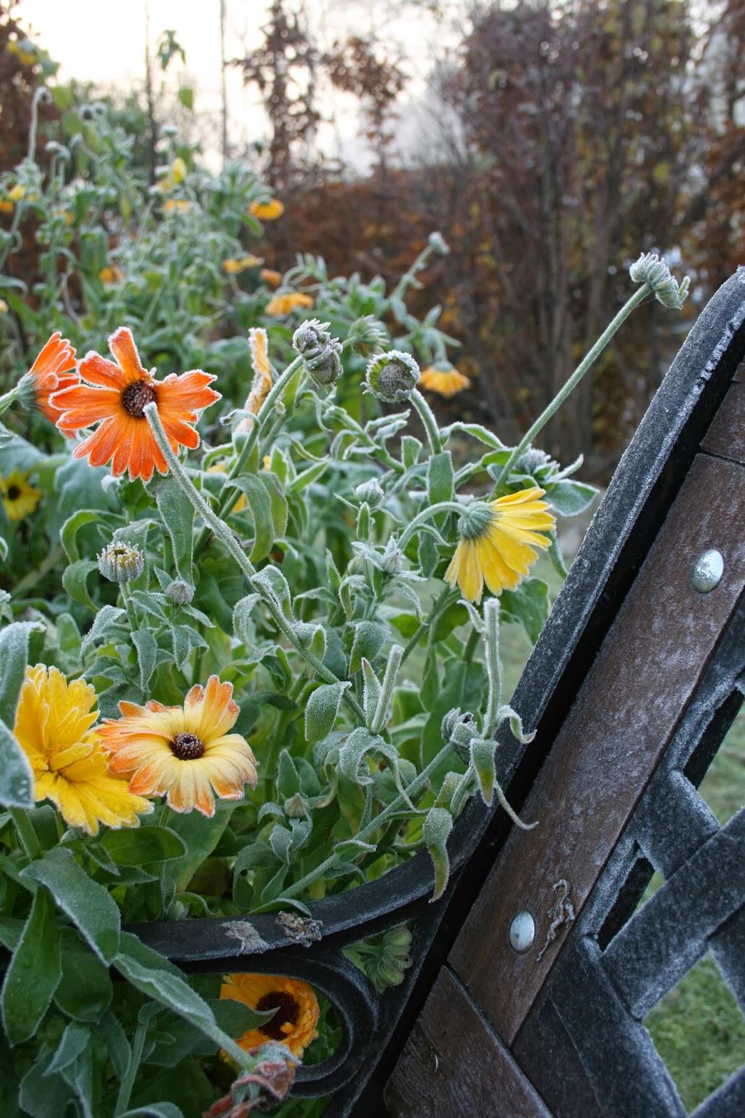 populär trädgårdsblogg