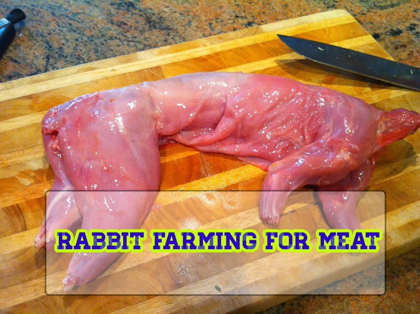 Rabbit Farming for Meat