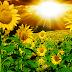 Syair Bunga Matahari