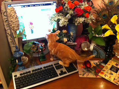 Dean Cat is ordering flowers online from his favorite florist,  Stein Your Florist Co.!