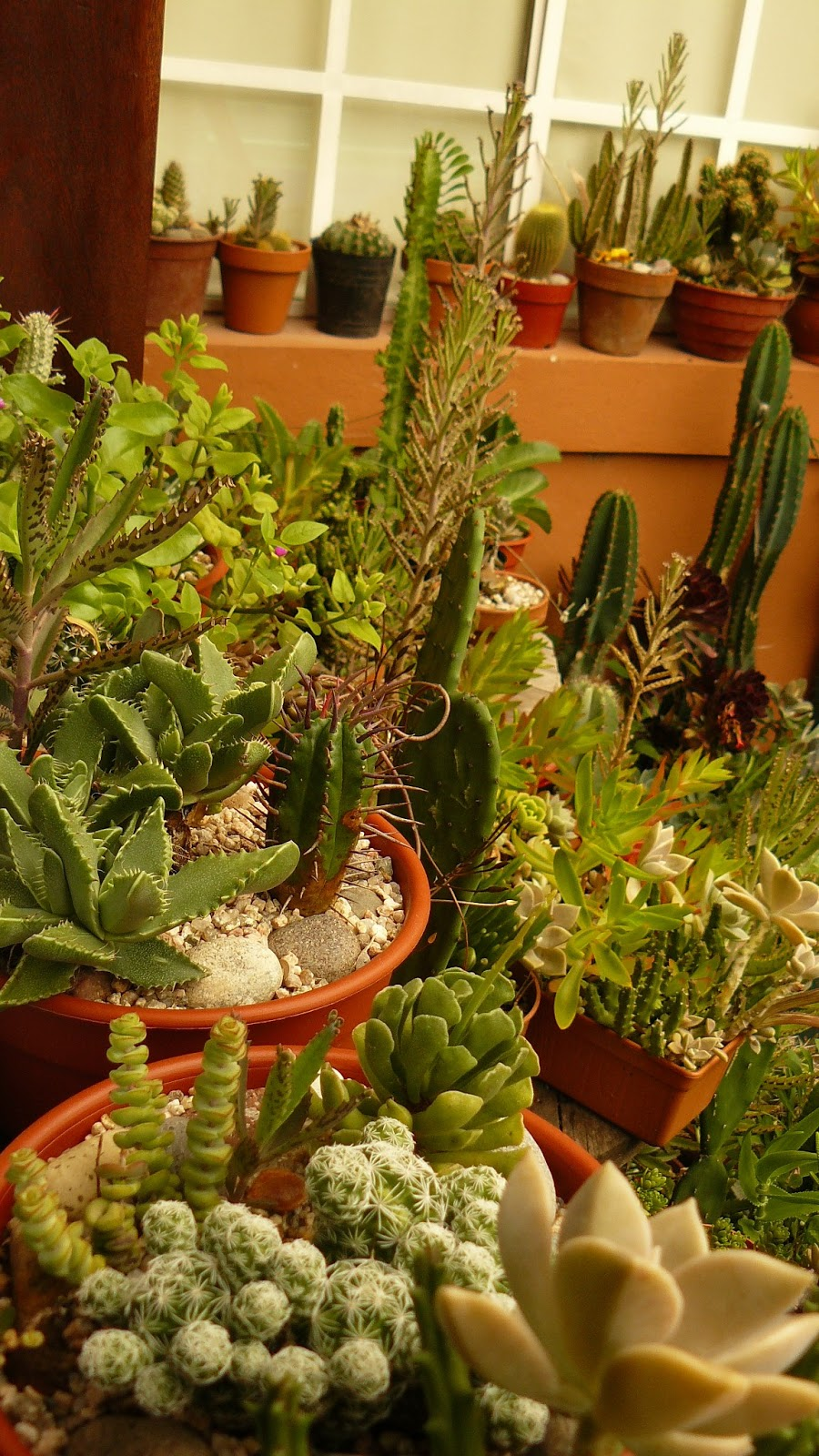 Jardines de cactus y suculentas no pierdas la cabeza - Jardines de cactus y suculentas ...
