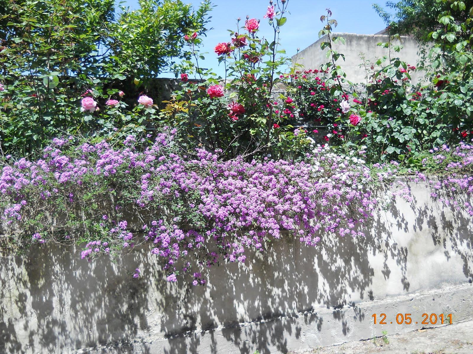 Di tutto un po 39 giardini bellissimi - Giardini bellissimi ...