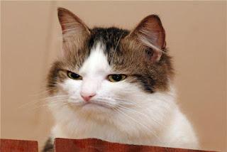 funny cat face cute
