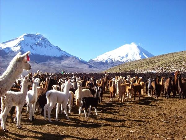 Pueblos originarios de chile agricultura for Terrazas economicas chile