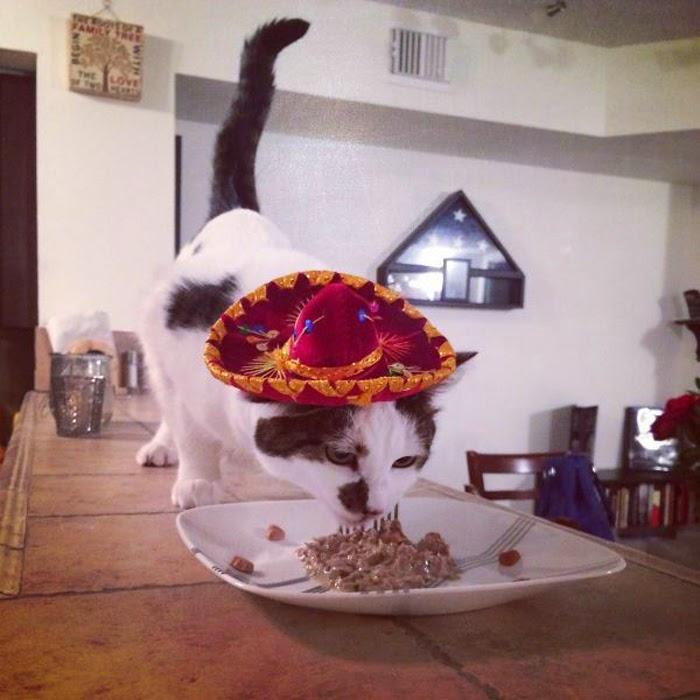 Crazy Cats - Rare Photos