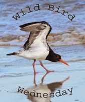 http://paying-ready-attention-gallery.blogspot.com/2015/09/wild-bird-wednesday-163-reflecting-on.html