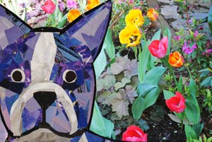 Bosty enjoys spring by Megan Coyle