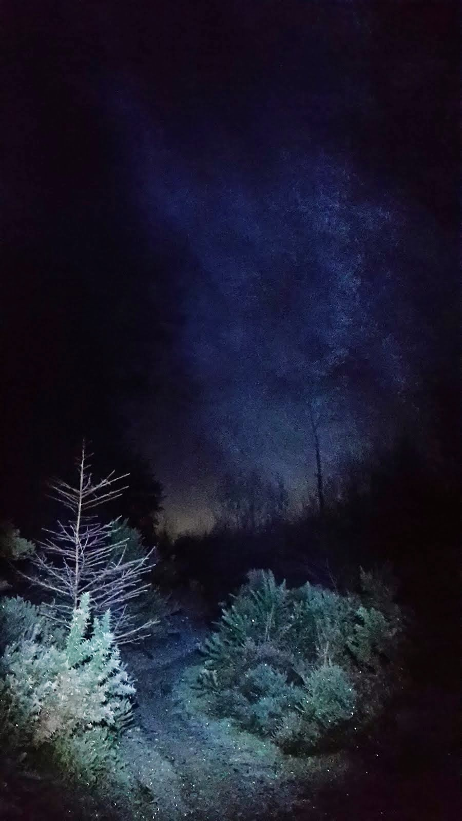 Night running in the forest