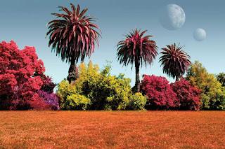 اجزاء النبات صور   الابتدائي 174100main_planet_pl
