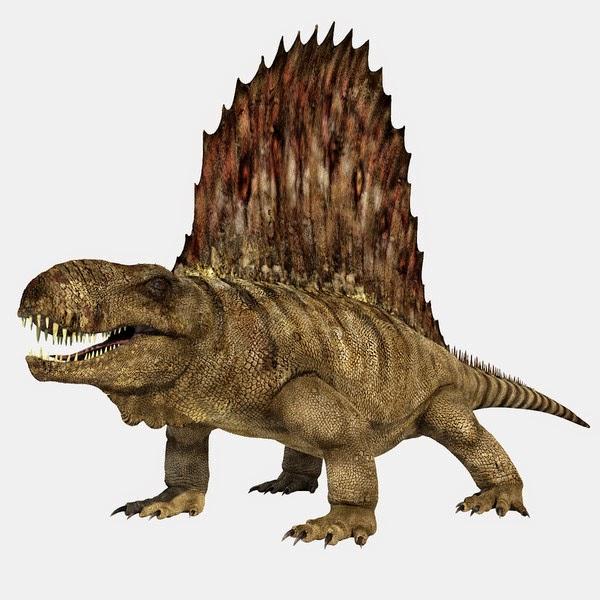 Paleontología y Evolución en la UCM: ¿Por que Dimetrodon no es un ...
