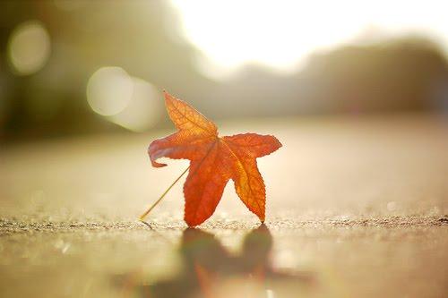 A última folha do nosso outono… tão primaveril … não tem o FIM…