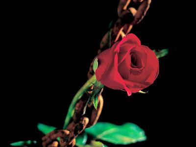 http://1.bp.blogspot.com/-C4CfCMaUUhQ/Tl-l_B1PaZI/AAAAAAAAAiU/suFn_2177HY/s400/Romantic+Roses+wallpaper-3.jpg