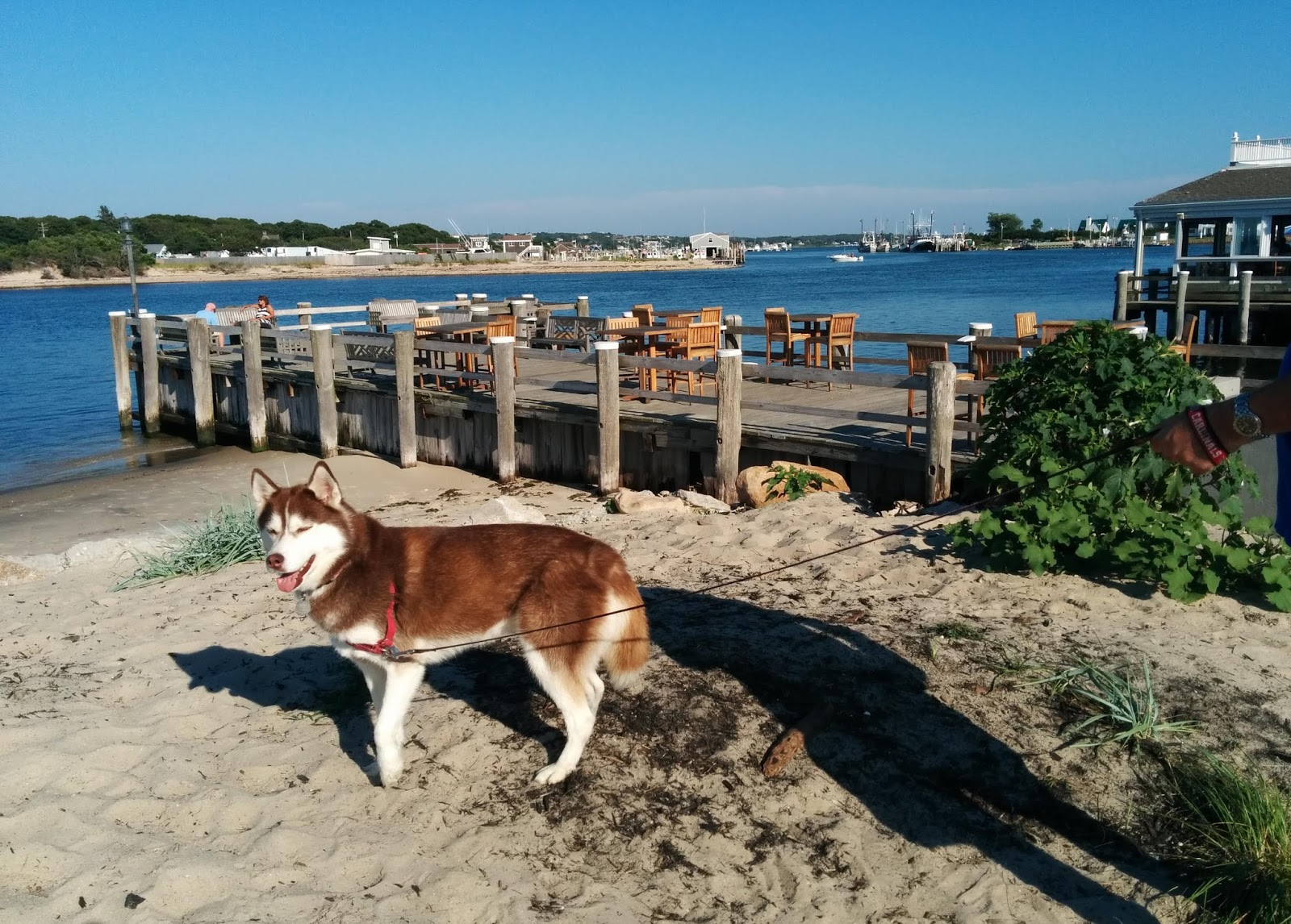 Dog Friendly Outdoor Restaurants Long Island