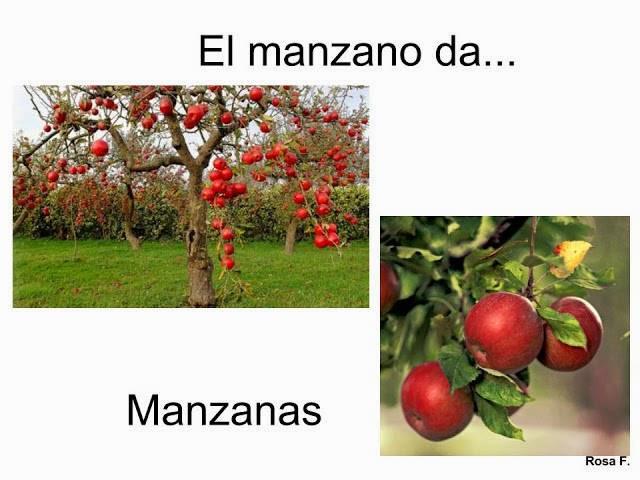 Maestra de primaria frutas y frutos for Arboles frutales para el jardin