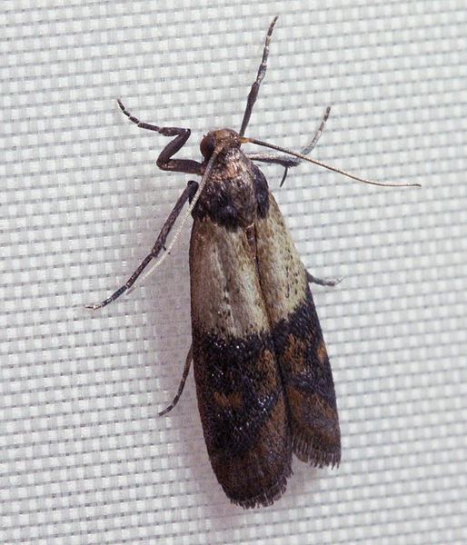 Felt inspiration the dreaded wool moth for Pantry moths