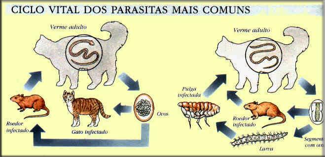 Seja compensado parasitas e vivo sem eles para comprar