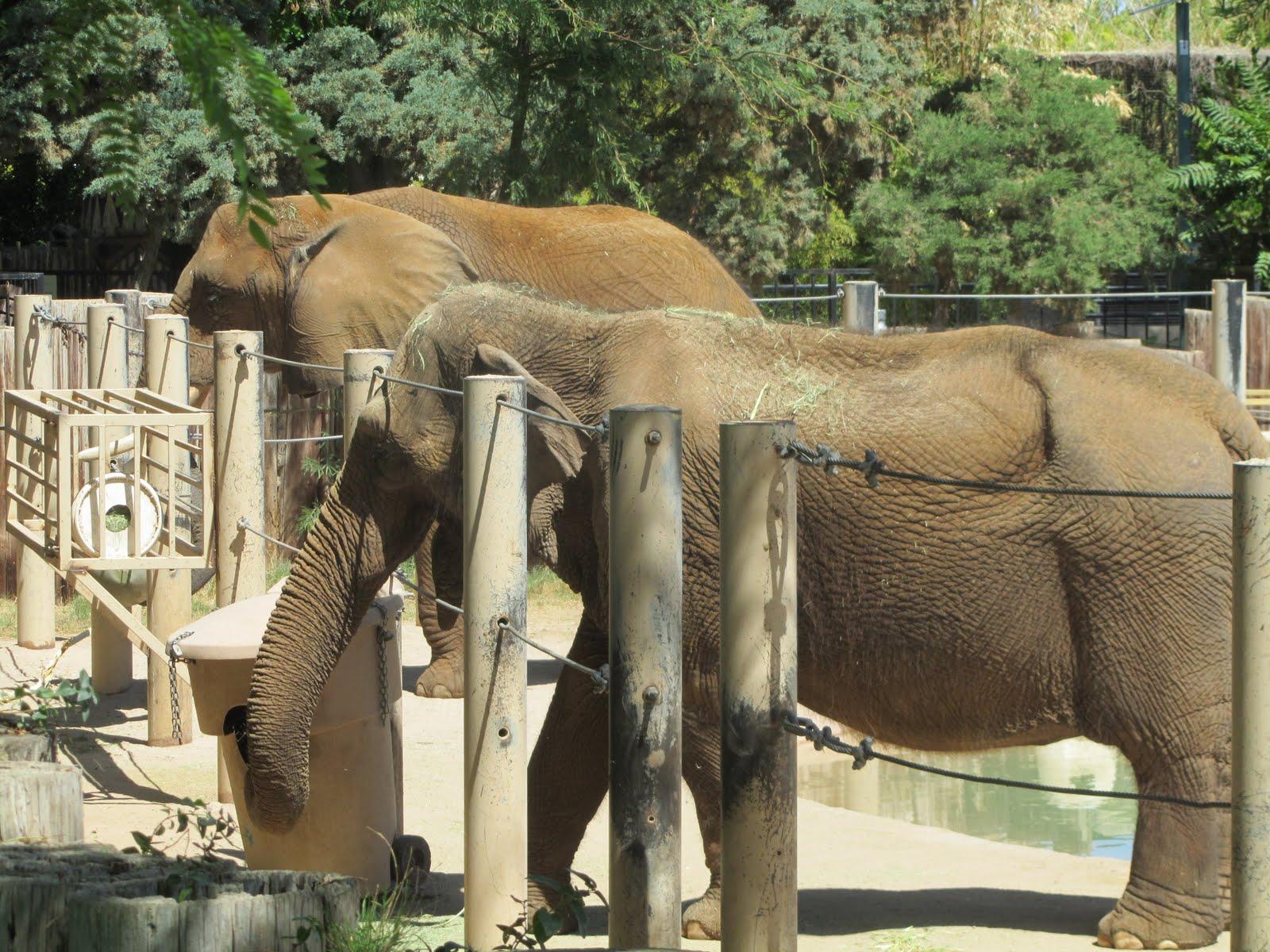 Az Buddy Reid Park Zoo Tucson