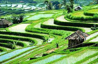 Tempat Lokasi Wisata Menarik Ubud Di Bali