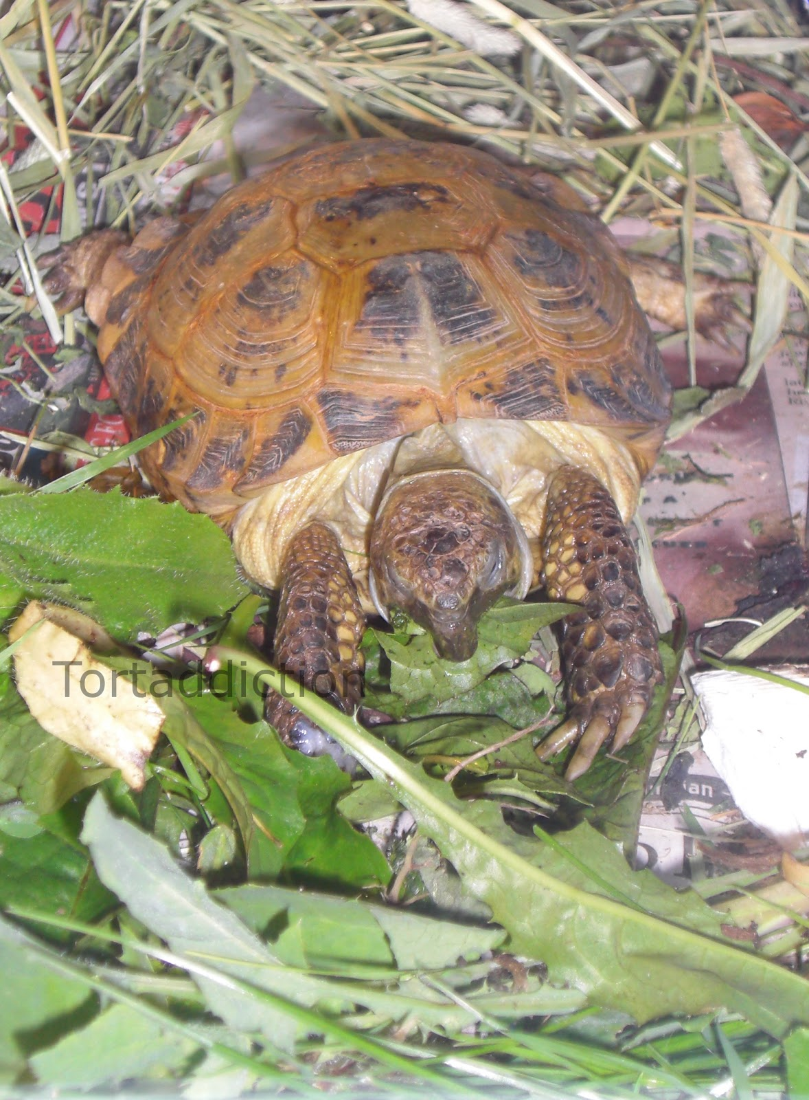 Tortaddiction november 2012 his shell is still painted with betadine nvjuhfo Gallery