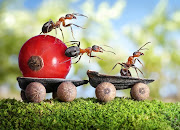 Montagens com. Formigas? (formigas com uma vida agiatda )