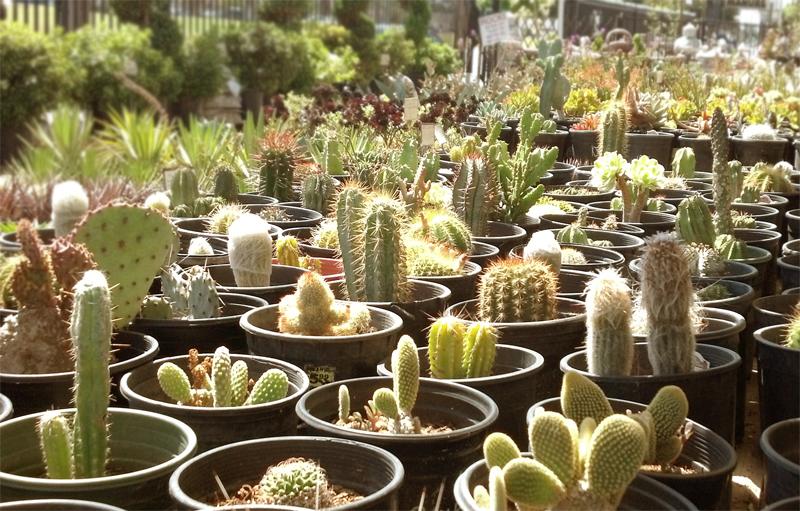 園芸 Moneta Nursery