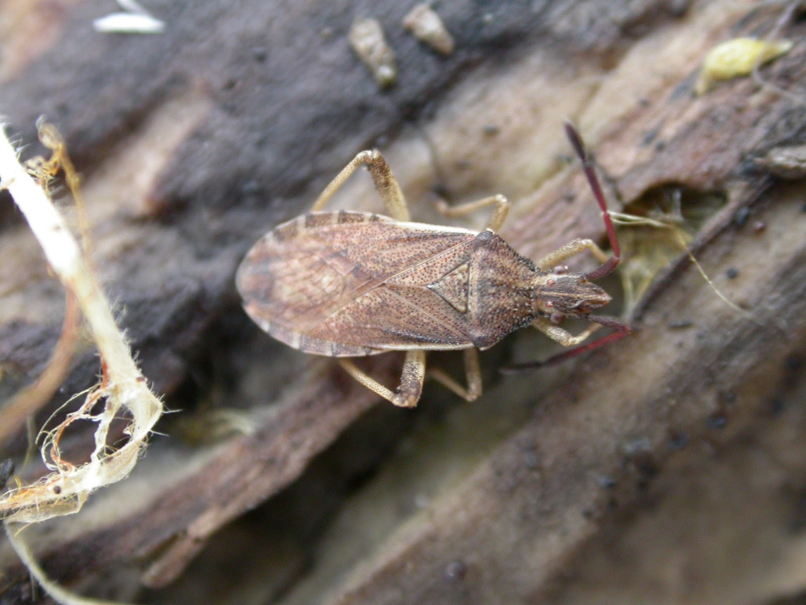 insect identification guide nz immigration