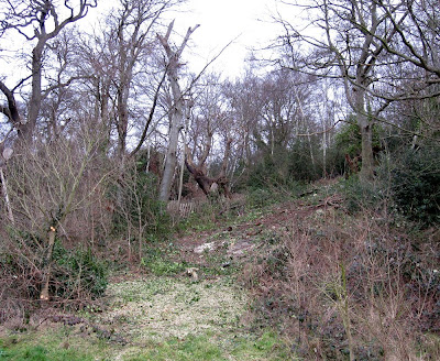 A cleared area to one side of a veteran oak on West Wickham Common, in winter
