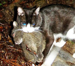 the environmental impact of feral cats preying on the songbird populations Species than do domestic and/or feral cats  estimate the economic and environmental impact of the cat on a  serious impact on bird populations.