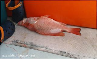 Ikan Merah Pulau Pinang, Pancing Ikan Merah